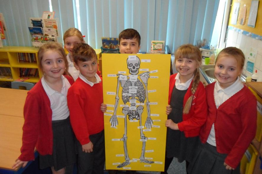 We have identified and labelled bones in the body