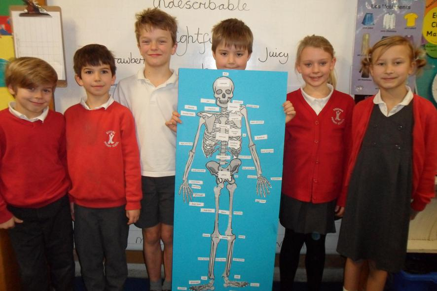 Now we're skeleton experts!