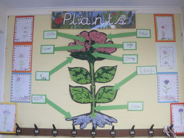Class 2 - Plants