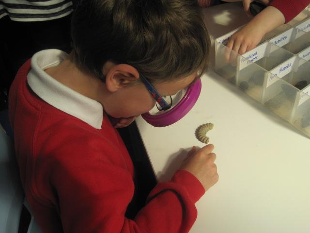 Investigating Fossils