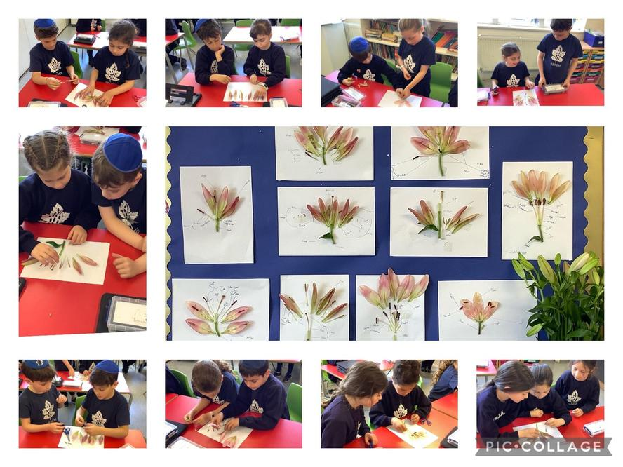 Our amazing science work, we dissected a flower