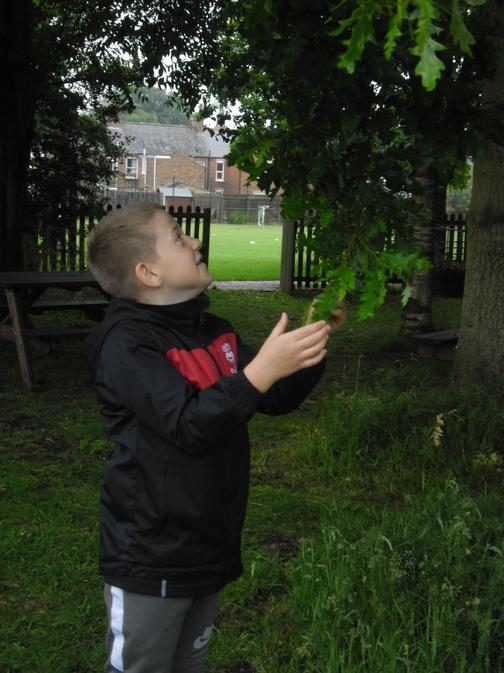 Harry searched for interesting leaves at school.