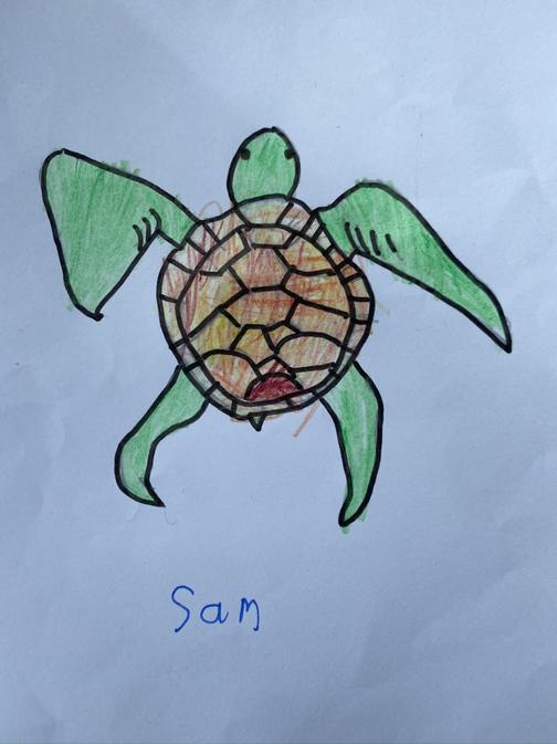Sam's great turtle drawing.