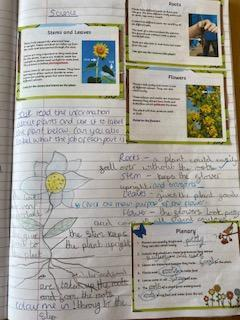 Tilly has learnt about the parts of plants too.