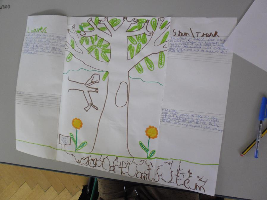 James started a poster about plants.
