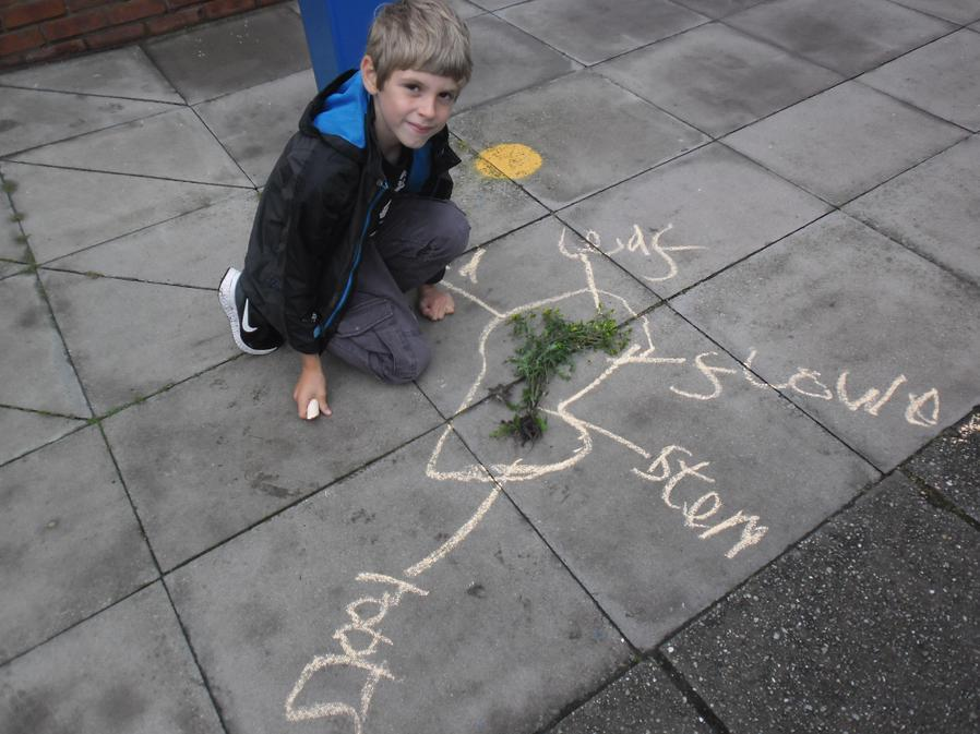 Louis can confidently label plants.