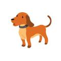 Voici un chien marron.  Il s'appele Georges.