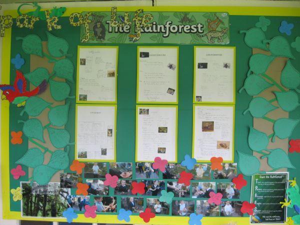 Spark of Life - Rainforest