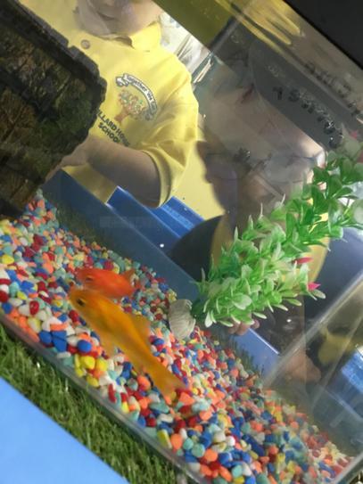 Hi Jack I think the fish love you already!