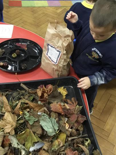 Oliver putting his Autumn treasures into our tuff tray.