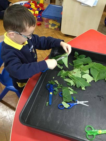 Look at how many leaves you have cut up Jack!