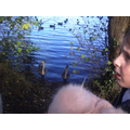 Looking at the baby swans.
