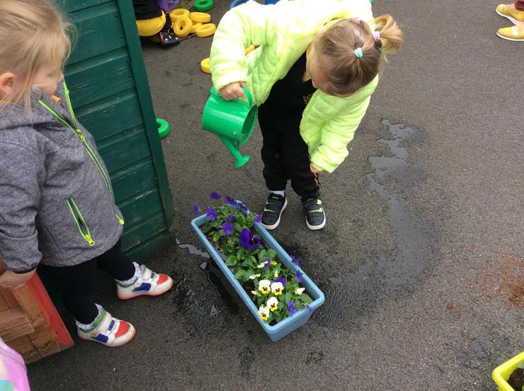 Watering the plants to help them grow.