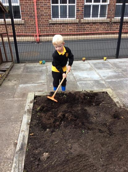 Using rakes to prepare the flower bed for some new plants.