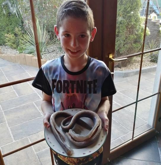 Caleb P5Gl cooked this Lough Neagh eel for tea!