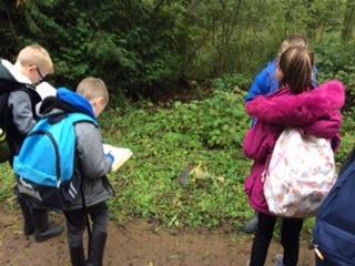 Year 4 looked for environmental dangers.