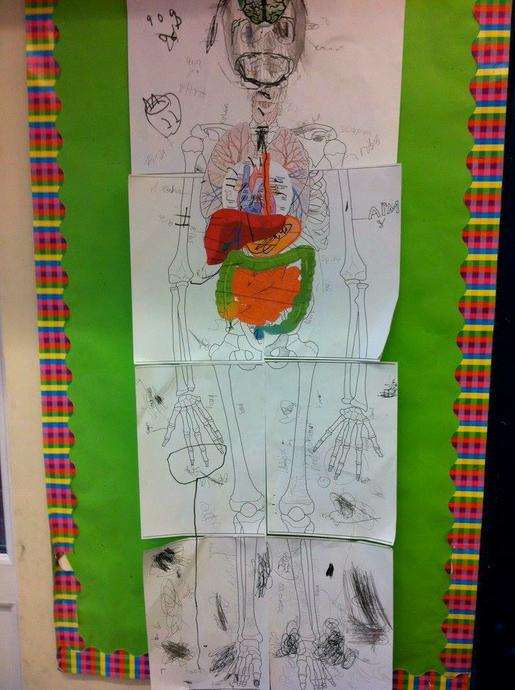 We labelled a diagram of our body
