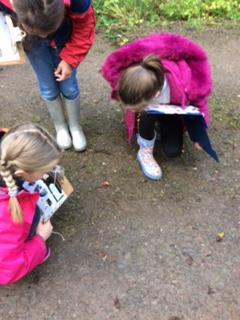 Year 4 looked for animal tracks.