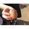 Eggcellent designs!