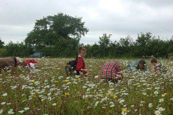 Elm class hunting for bugs in a meadow