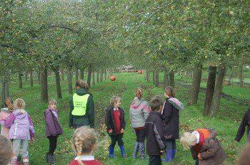 Elm class in the orchards of Burrow Hill