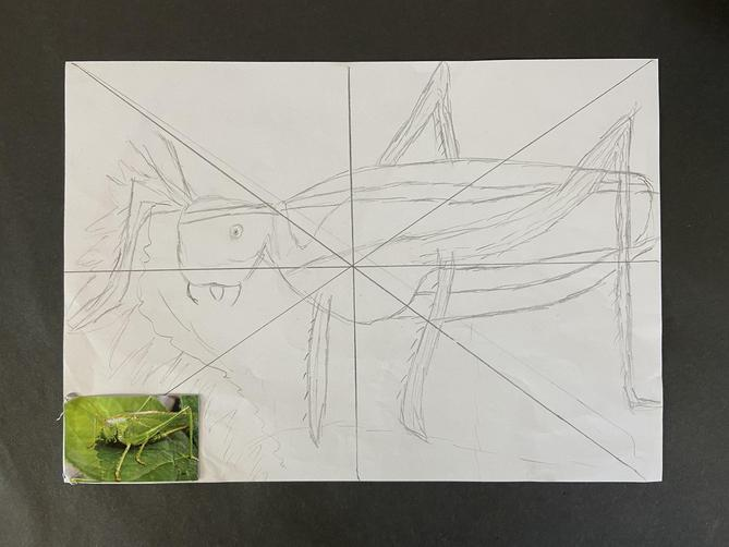 We drew insects and scaled them up.