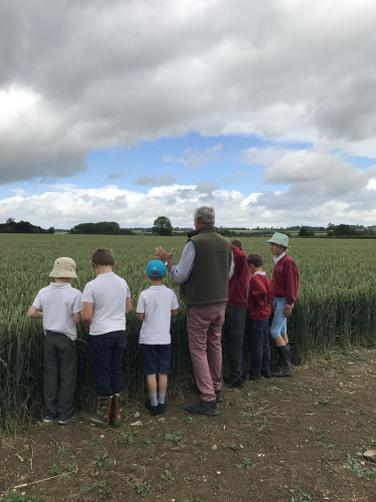 Farmer Henry told us all about wheat