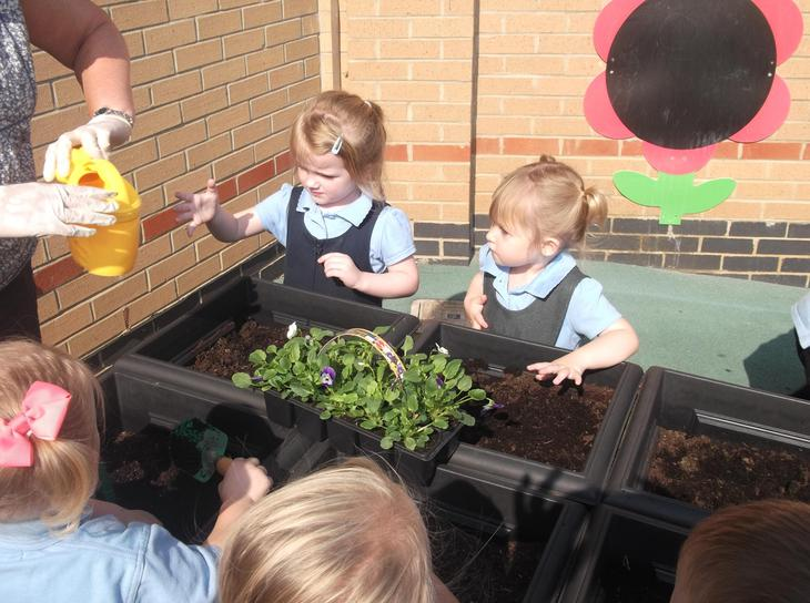 We look after the plants and insects