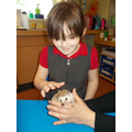 Meeting Mr Pekay the hedghog