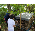 Filling the bug hotel with sticks.