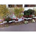 Those who visited the school today will have seen the beautiful results of our Poppy Project A huge thank you to Miss Warren for putting this display together, and to everyone who donated plastic water bottles and garden canes. These poppies are outside the school office, with the rest due to be displayed throughout the playground.