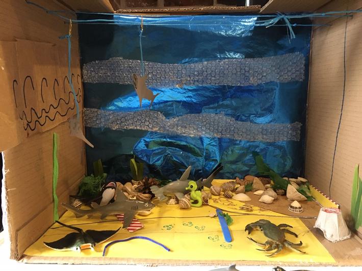 Rohan's aquarium