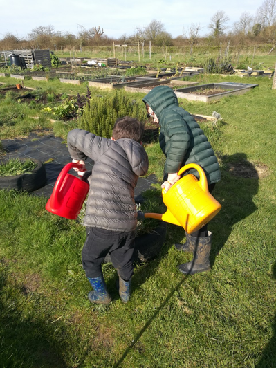 Planting at the allotment!