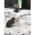 Stephanie's rabbit liked the snow too!