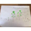 Grace has drawn the life-cycle of a tree