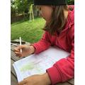 Learning about oak trees