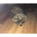 Edwin found a hedgehog