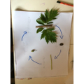 Natural objects to make a life cycle.