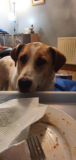Daisy wanting leftovers