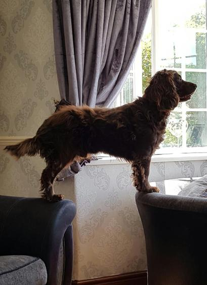 Bailey being nosey looking out of the window.