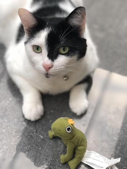 Sam with his frog