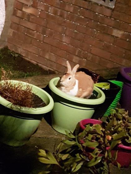Patch loves a nice plant pot