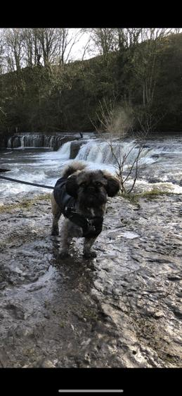 Paddy on his holiday visiting Aysgarth Falls.