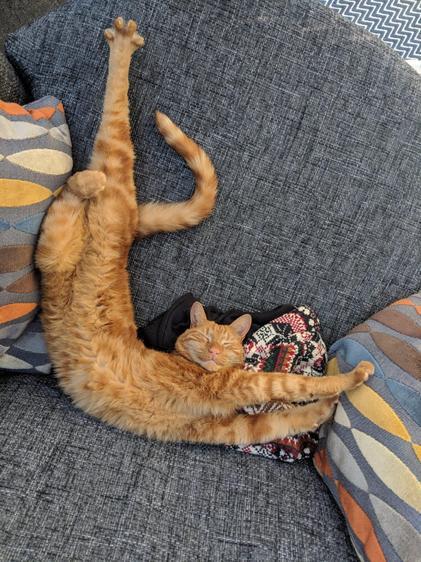Stretchy Flynn