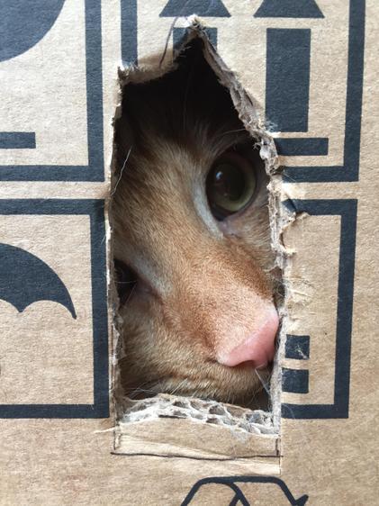 Flynn in a box