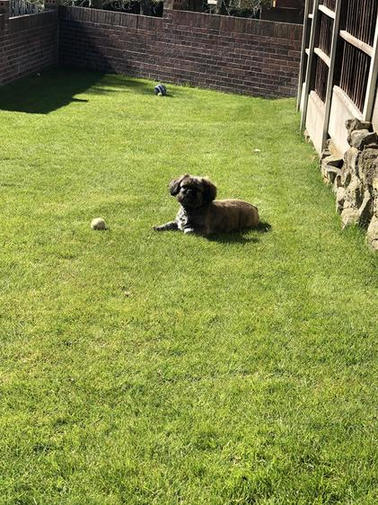 Playing fetch in the garden.