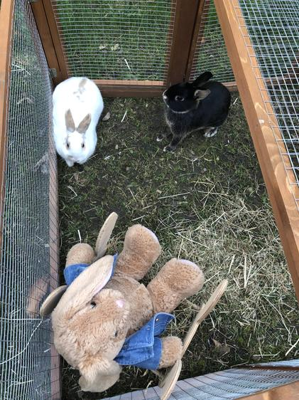 Briar and Bramble with Peter Rabbit!