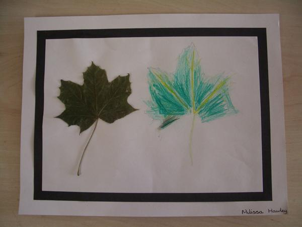 Autumn leaves in pencil crayon.