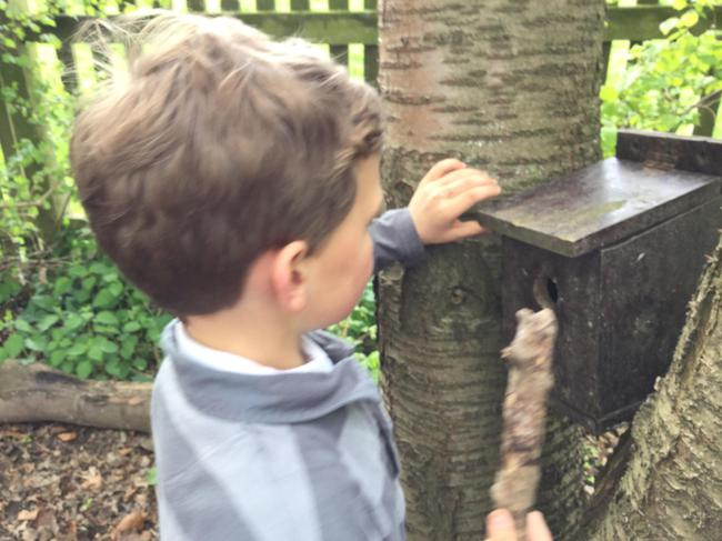 Checking our bird boxes at Forest School
