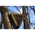 Bee Home! Feb 2016